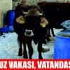 Soma'da Kuduz Alarmı