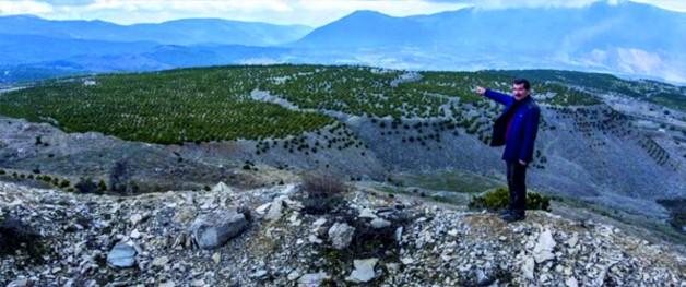 Soma'da Maden Sahaları Ağaçlandırılıyor