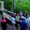 Soma'da Orman İşçisi Hayatını Kaybetti