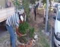 Park ve Bahçeler Müdürlüğü'nün  Çalışmaları Aralıksız Devam Ediyor