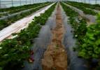 Büyükşehir 120 serayı daha çiftçilere teslim etti