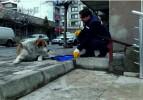 Soma Belediyesi Sokak Hayvanlarını Unutmadı