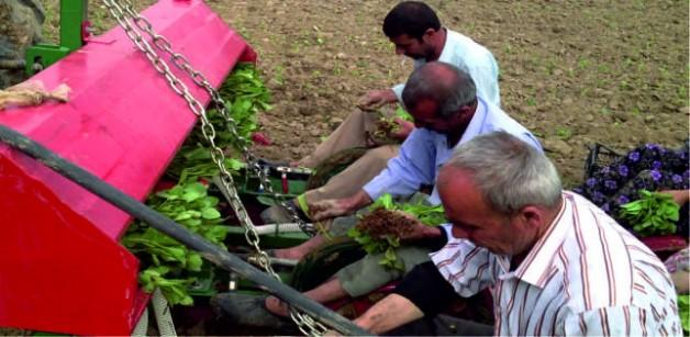 Çiftçiler Tütün Yetiştiriciliği Hakkında Bilgilendirildi