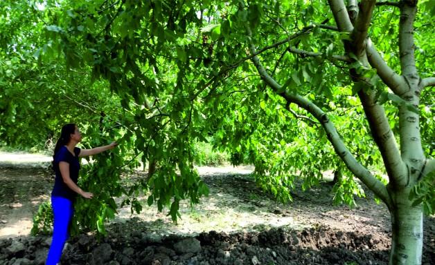 Tarım Danışmanları Arazileri Dolaşmaya Devam Ediyor